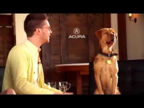 A Dog Movie Star Demonstrates the Art of Canine Acting