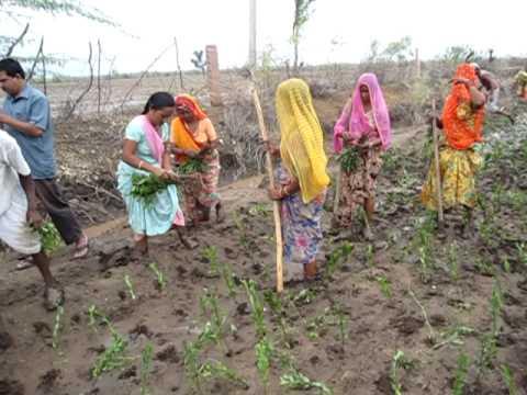 Smhenna2004 Henna Plantation 2010 Youtube
