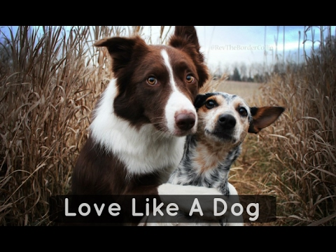 Amazing positive inspirational video against discrimination- Learn to love like a dog
