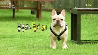 세상에 나쁜 개는 없다 - 성난 불도그의 혈투_#003