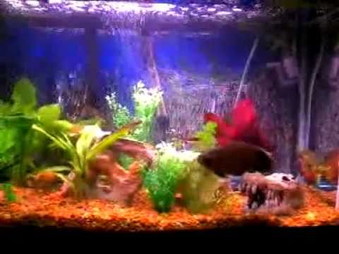 how to make fish tank water crystal clear