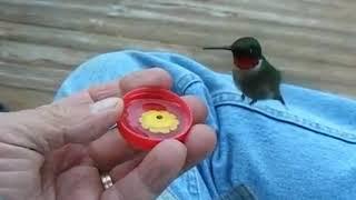 Video Si kecil kolibri yang lucu dan jinak download MP3, 3GP, MP4, WEBM, AVI, FLV Juni 2018