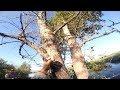 БУЛЬК Снимая блесну с дерева будь готов ко всему mp3
