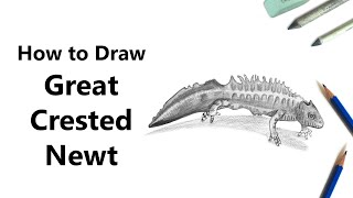 How to Draw a Great Crested Newt with Pencils [Time Lapse]