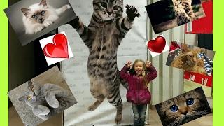 Выставка кошек котов самые красивые кошки коты котята корниш рекс сфинкс влог едем на выставку минск