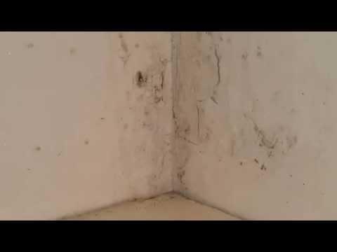 Schimmel Muur Verwijderen : Schimmel verwijderen simpele stappen voor schimmel op plafond