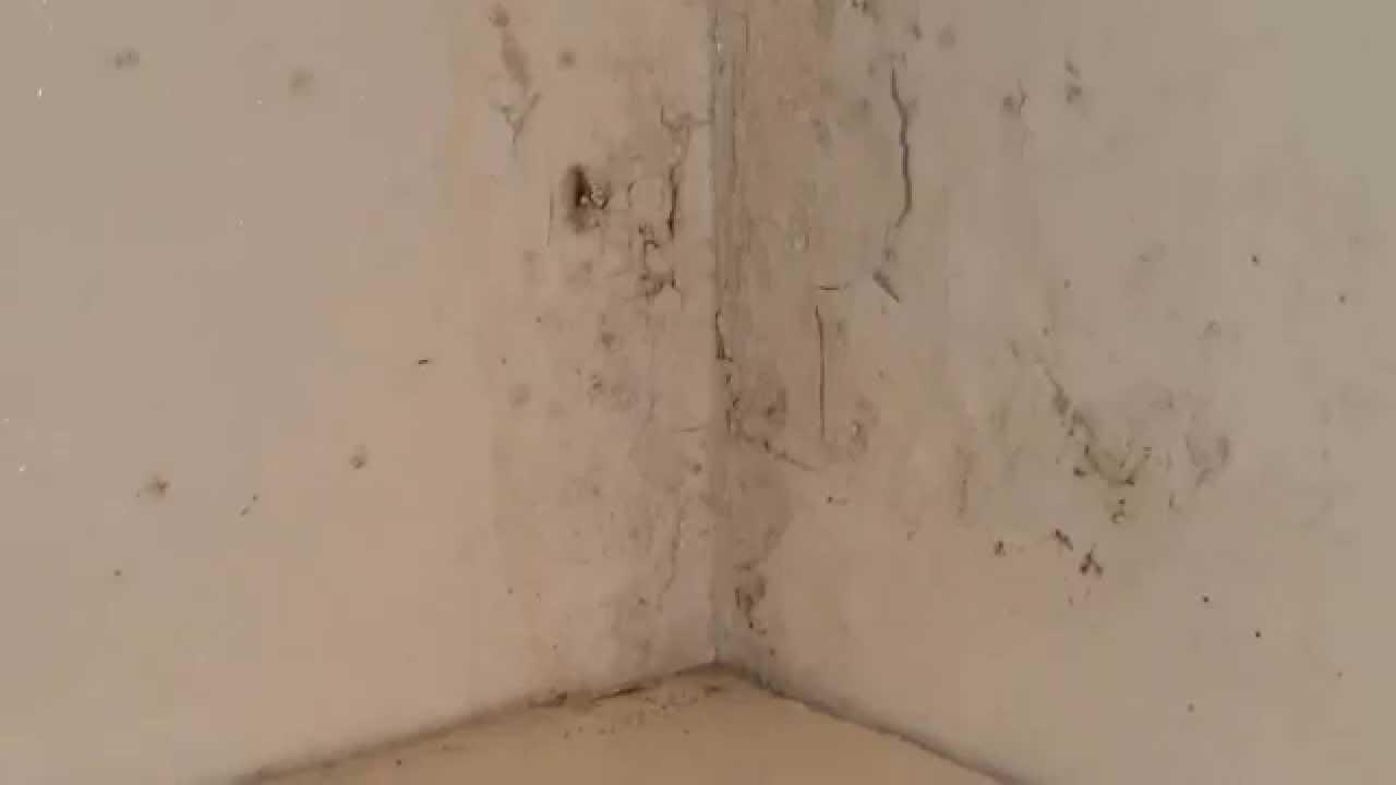 Schimmel Verwijderen Muur : Schimmel verwijderen simpele stappen voor schimmel op plafond