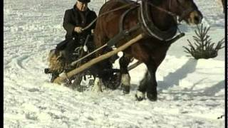 Horse Sled Racing