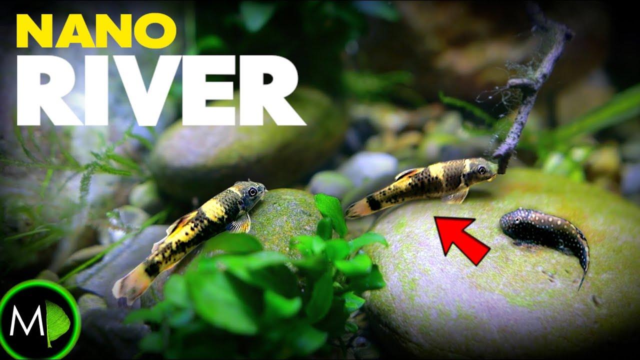 AMAZING FISH in Realistic River Aquarium | MD Fish Tanks