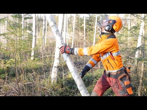 The Art Of Forestry