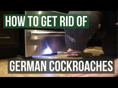 How to Get Rid of German Cockroaches (4 Simple Steps)