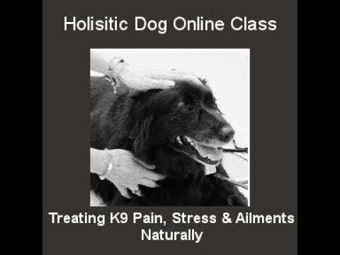 The Holistic Dog- Treating K9 Pain, Stress and Ailments Naturally. Online Class