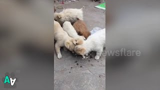 Stray Puppy Brings Back some Food to its Mum