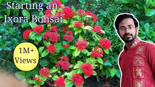 How to make a bonsai tree
