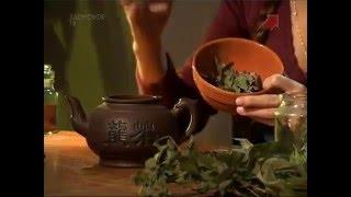 Как приготовить настойку и отвар эвкалипта