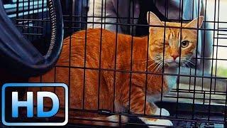 Фрэнк спасает кота Мэри / Одарённая (2017)