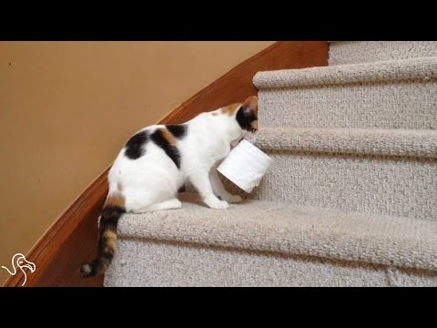 Cats Who Love To Steal Things