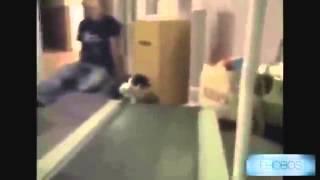Смешные кошки  Часть 01 супер длинная