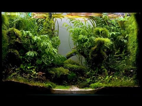 Diy Bio Active Paludarium Frog Tank Basics Youtube