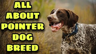 Pointer dog breed information in Hindi / Urdu l All about pointer dog breed