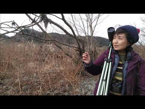 自然環境観察員 野鳥調査「相模川大島・神沢周辺の紹介」