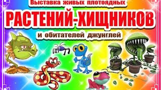 Выставка растений-хищников, играю со змеями, ящерицами, пауками,хамелеоном.