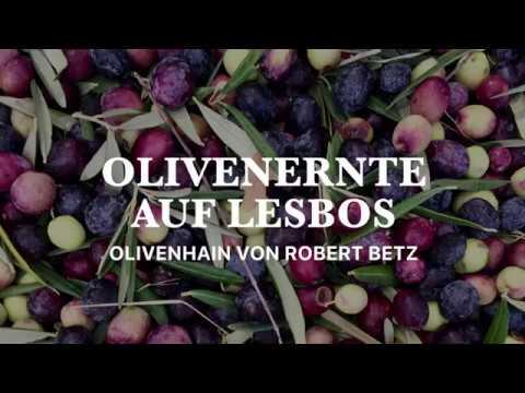 2018 Olivenernte auf Lesbos