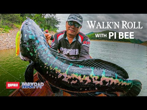 Giant Snakehead Hunting - Rapala MaxRap Walk'N Roll In Thailand