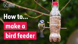 How to make a bird feeder | Natural History Museum
