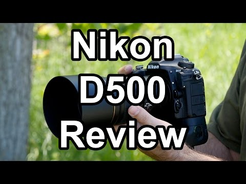 nikon-d500-review,-a-wildlife-photographer-s-perspective