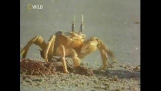 Животный Мир Пустыни. Документальный фильм.