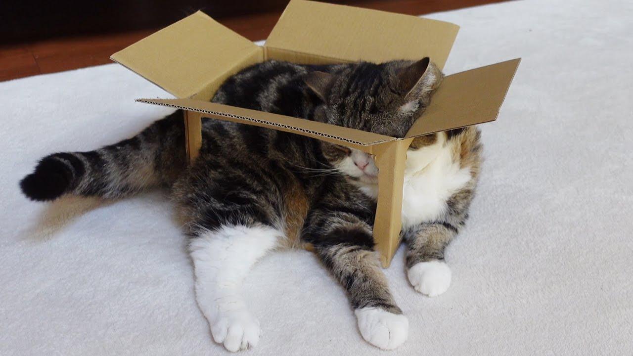通気性抜群な箱とねこ4。-Excellent Breathable Box and Maru 4.-
