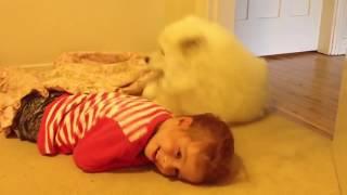 심쿵하는 아기 강아지 영상 모음