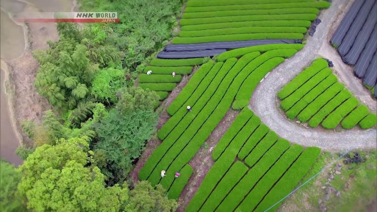 Photo of Proper Tea [Saga] – JAPAN FROM ABOVE: UP CLOSE – video