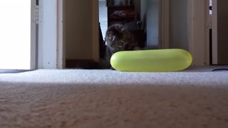Funny Cats Playing With Balloons  Cats VS Balloons Compilation