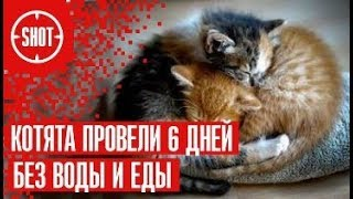 Котята провели 6 дней без воды и еды