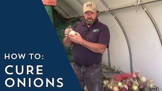 how to cure onions