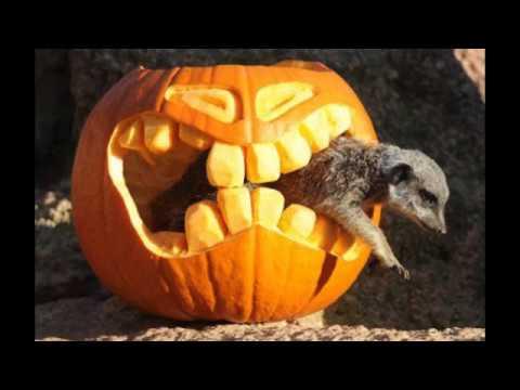 Halloween Youtube