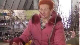 видео Общие правила посадки садовых деревьев
