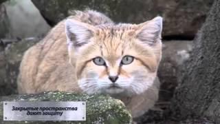 Смешные коты Почему кошки любят коробки