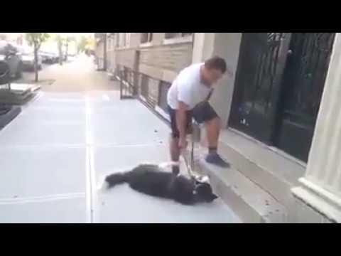Funny)))Very lazy dog!!!