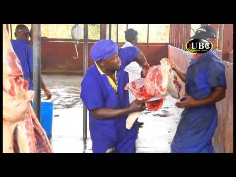 Modern Farming - ILRI Spearheads Development of Pig slaughter houses