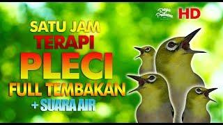 Gambar cover TERBARU TERAPI PLECI BUKA PARUH FULL TEMBAK + SUARA AIR HD