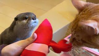 カワウソさくら ぬいぐるみにどハマりする猫にドン引きするカワウソ Otter worried about cat who like stuffed animals