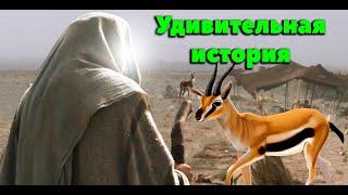 Любимец Всевышнего 71 часть. Пророк ﷺ и Газель