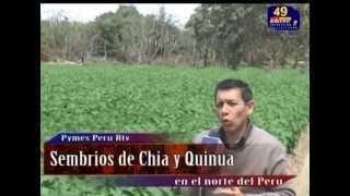 CHIA  Y QUINUA EN  LA COSTA DEL PERU