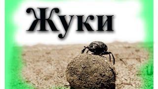 Развивающие картинки - жуки