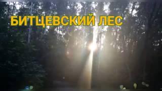 Смотреть видео РЕЛАКС. Красота Битцевского леса в Москве. RELAX. Bitsevsky forest in Moscow! онлайн