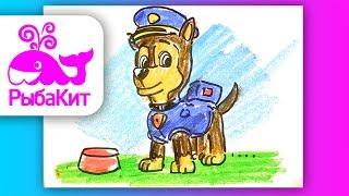 Как нарисовать Щенячий Патруль ГОНЩИК / How to draw Puppy Patrol