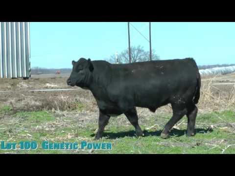 Lot 100  Genetic Power